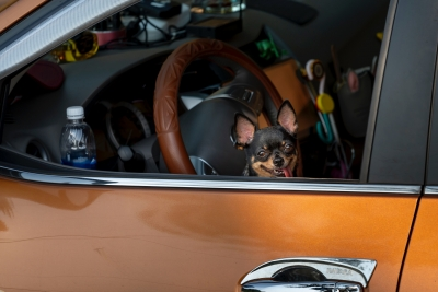 Car Travel with Pets: 10 Tips for Safety and Security